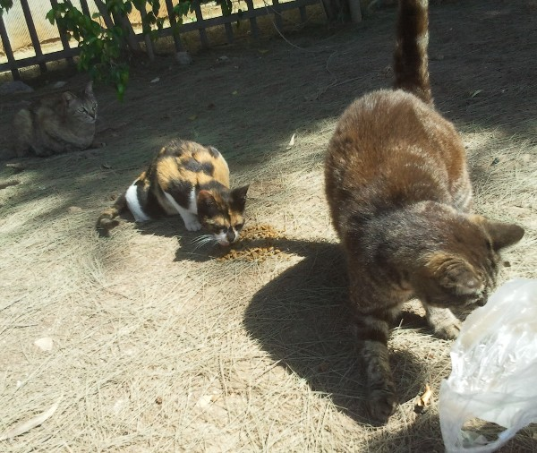 cute street cat dining scene