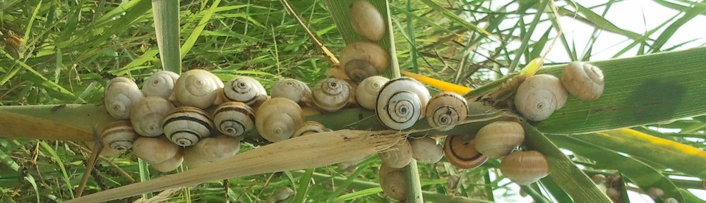 web sites snails and bamboo shoots